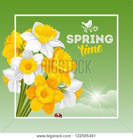 Vector Fresh Spring Illustration with Spring Flowers Yellow and White Daffodils. Floral Spring Bouquet in frame with Text Spring Time.