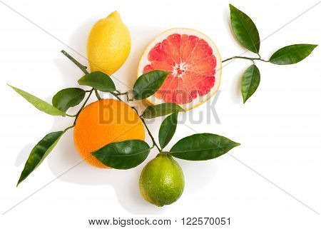 Top view of citrus fruits (grapefruit orange lemon lime) on a branch with green leaves isolated on white background.