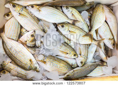 Many little caught dead fish with ice on market