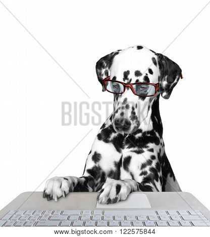 Dog working on the computer -- isolated on white background