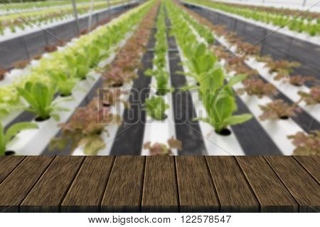 organic hydroponic lettuce vegetable growing in agriculture farm (blur background with wood table top for display or montage your product)