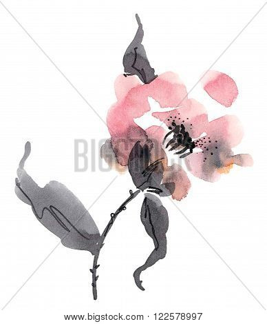 Watercolor and ink illustration of pink flowers in style sumi-e u-sin. Oriental traditional painting.