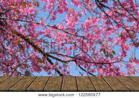 Flower Of Wild Himalayan Cherry