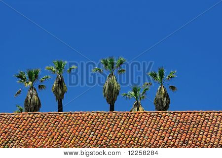 Palm Trees And Red Tiles