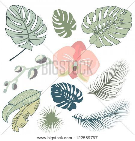 Tropical leaves and the orchid, Vector illustration