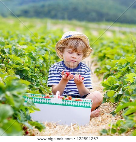 Beautiful little kid boy picking and eating strawberries on organic bio berry farm in summer, child on warm sunny day. Harvest fields in Germany. Healthy food for children.