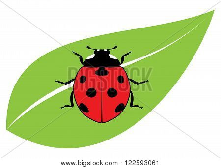 vector red ladybird on a green leaf