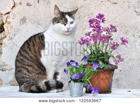 sitting cat nexte to flower pots on a garden table