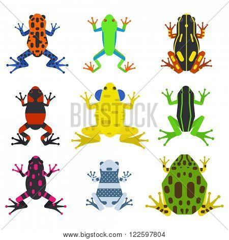 Frog cartoon tropical animal and green frog cartoon nature icons. Funny frog cartoon collection vector illustration. Green, wood, red toxic frogs flat syle isolated on white background