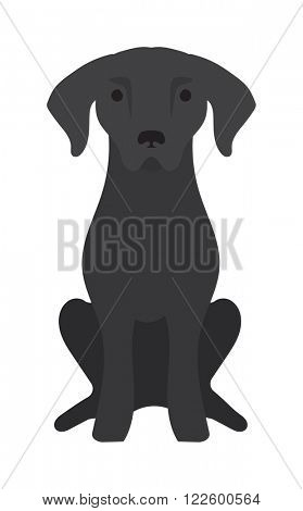 Labrador dog pet and icon labrador black dog vector. Black Labrador retriever dog domestic animal vector illustration.
