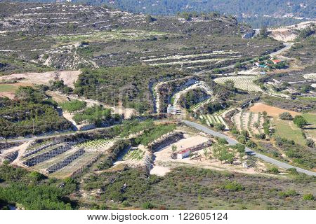 Vineyards Of Cyprus
