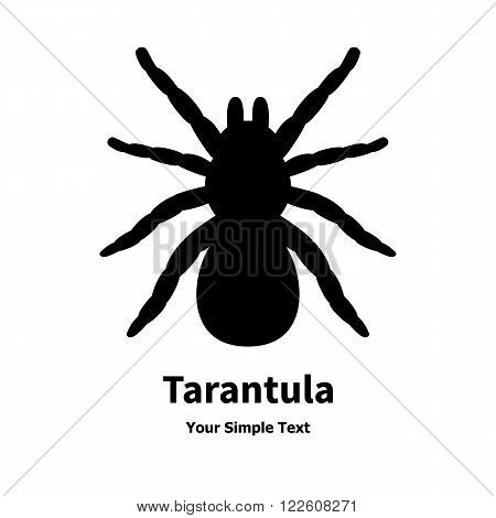 Vector illustration of a black spider tarantula. Isolated silhouette on a white background.