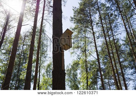 Small house for birds on a high pine tree