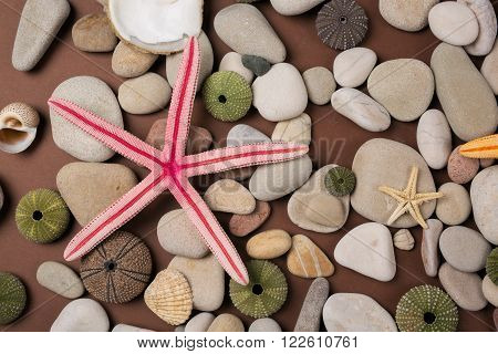 background with starfish sea urchin and pebble
