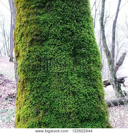 Hundred years of moss green, fully seized the tree