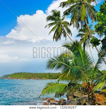 A Coconut palms on the ocean shore