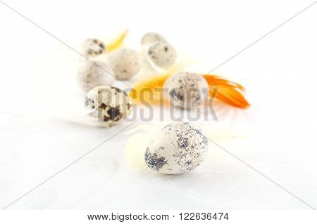 Many easter quail eggs scattered on white tablecloth