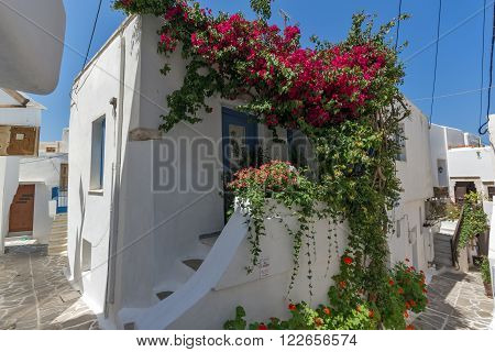 White house covered with red flowers, Chora town, Naxos Island, Cyclades, Greece
