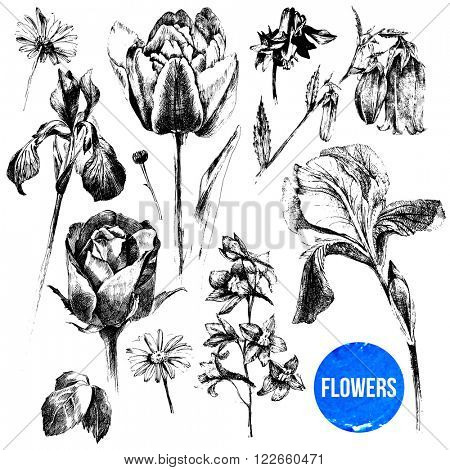 Collection of hand drawn black and white flowers