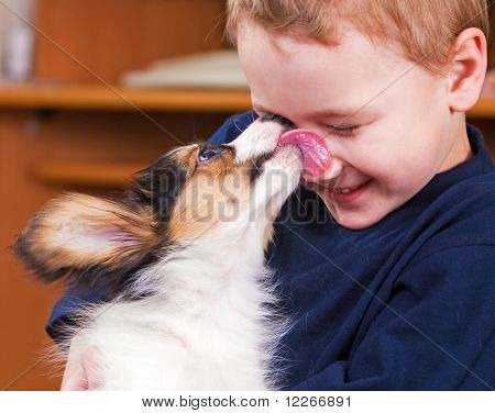 Puppy Papillon Licking ? Boy