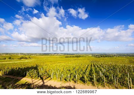 Vineyards of Beaujolais during a sunny day, France