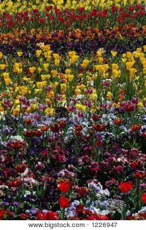 m Regenbogen von Blumen