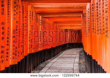 KYOTO JAPAN - NOVEMBER 18 2015 : Red Torii gates in Fushimi Inari shrine one of famous landmarks in Kyoto Japan