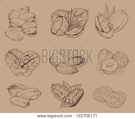 Isolated nuts on light brown background. Engraved raster illustration of leaves and nuts of pistachio, pecan, walnut, coconut, cocoa, hazelnut, almond, peanut. Mixed nuts.