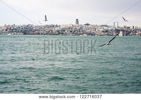 Seagulls In Istanbul Sky