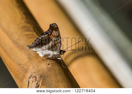 Brown and white butterfly on wooden handrail