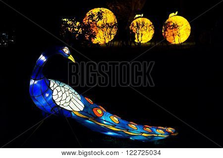 London United Kingdom - February 07 2016: Magical Lantern Festival at Chiswick House And Gardens. Installation of peacock lantern with orange lanterns in the background.