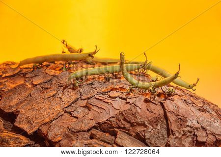 Bush beans with tomato bed feet on a tree bark in the evening sun as decoration