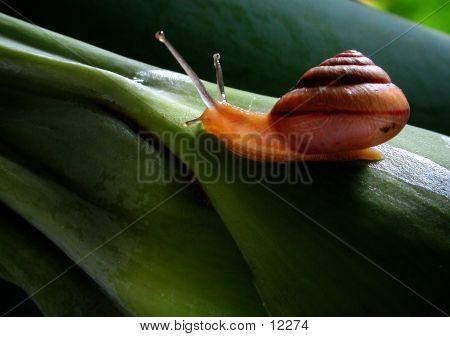 Snail's Stalk