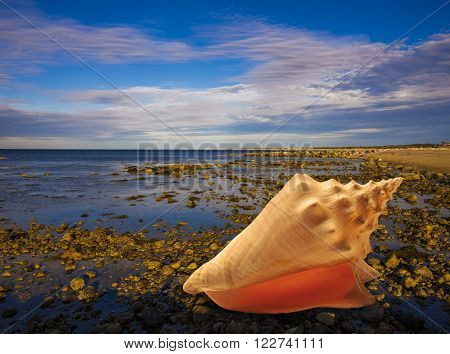 Large conch shell in foreground on rocky beach