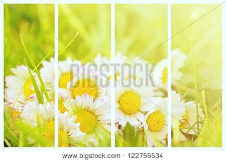 Daisy Plant Collage