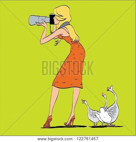 Girl photographer and geese in nature. Shooting wildlife. A humorous scene. The woman photographer