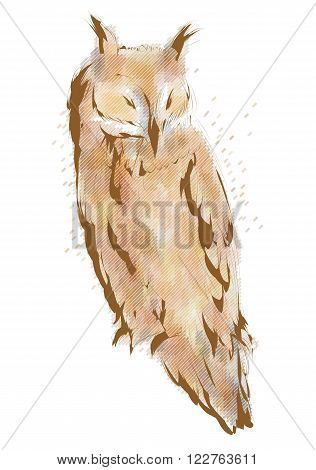 long eared owl isolated on white background