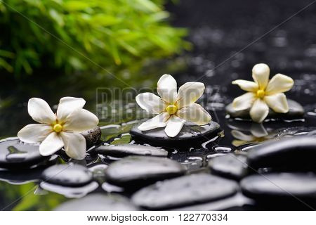 Three gardenia on black pebbles
