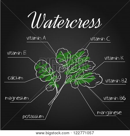 vector illustration of nutrients list for watercress on chalkboard backdrop.