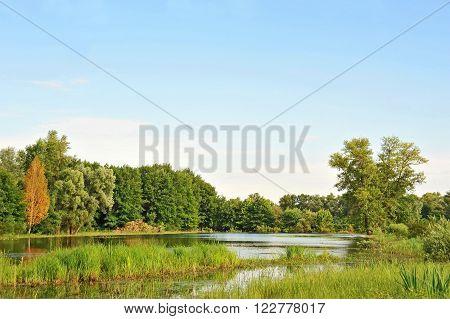 Poplar tree over forest lake Kiev Ukraine
