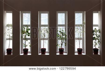 Six narrow windows with flowerpots in hall