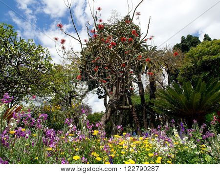the nature on the portugese Island of madeira