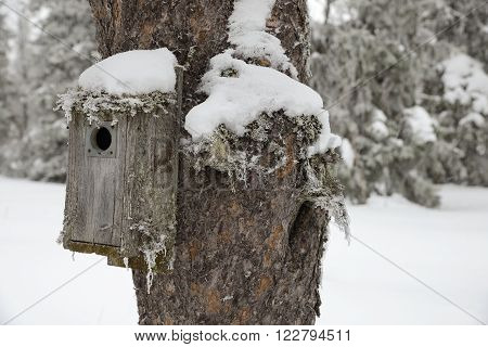 Birdhouse with Snow in a Winter Garten.