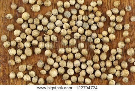 Coriander seeds coriandrum sativum also called pak chee cilantro and chinese parsley.