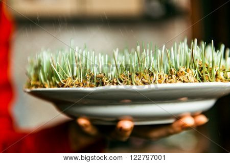 germinated wheat and bread on plate. On the table