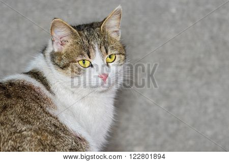 Outdoor portrait of beautiful ordinary cat (male) with yellow eyes
