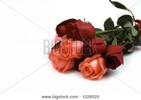 Rosa y rosa roja