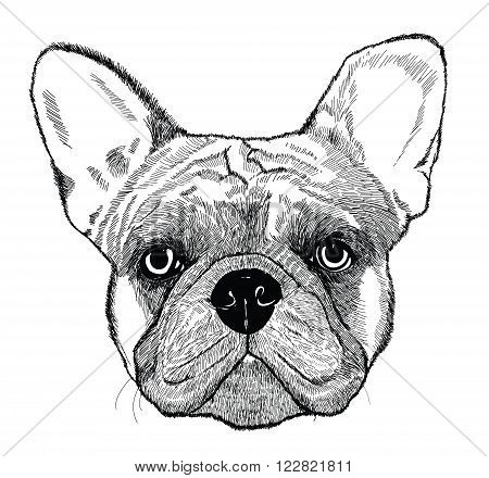 French bulldog, vector dog illustration in engraving technics