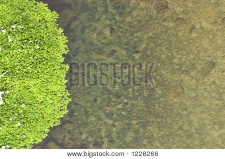 River Plants On Left