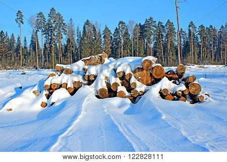 Harvesting timber logs in a forest in Russia at winter